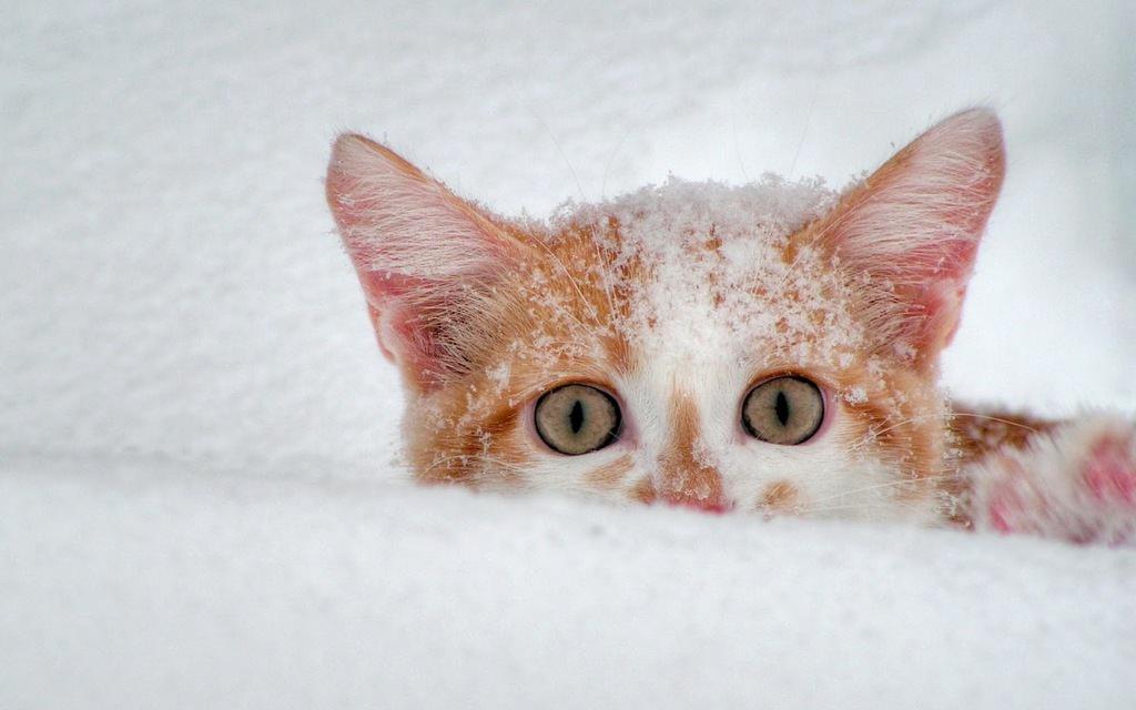 En güzel kedi resimleri - 77. resim