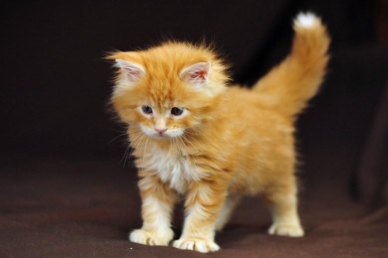 En güzel kedi resimleri - 78. resim