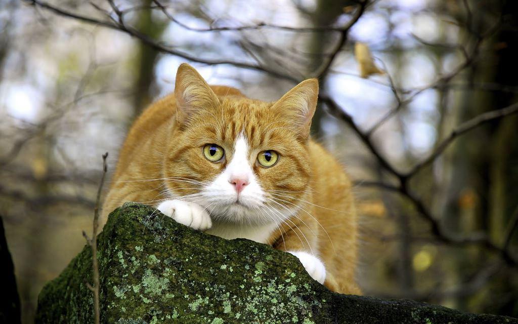 En güzel kedi resimleri - 79. resim