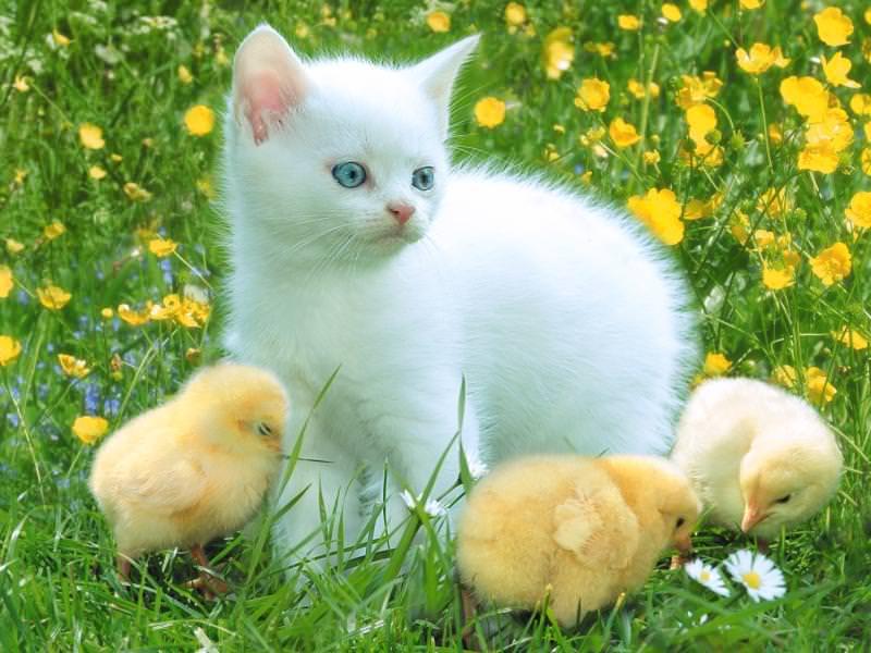 En güzel kedi resimleri - 8. resim