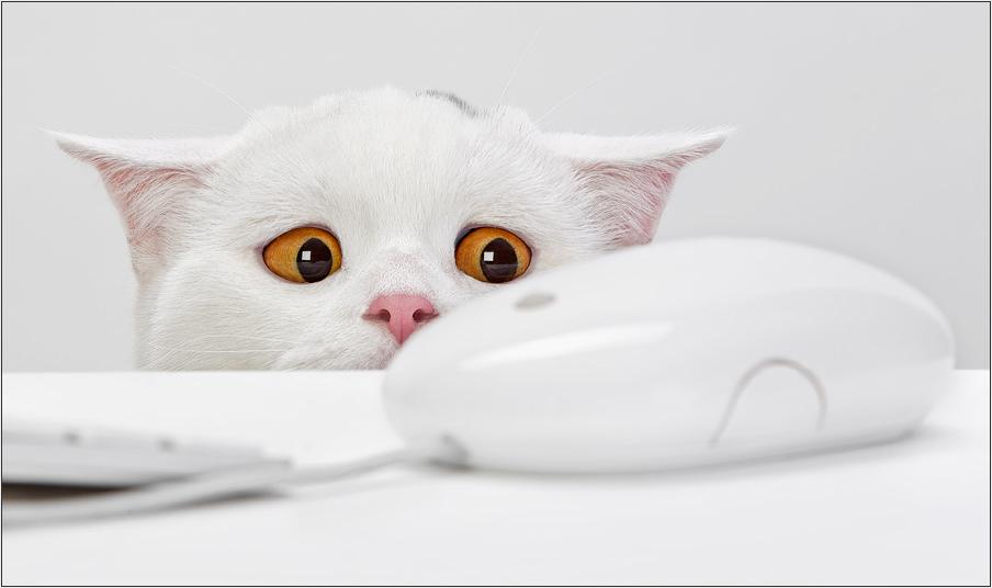 En güzel kedi resimleri - 80. resim
