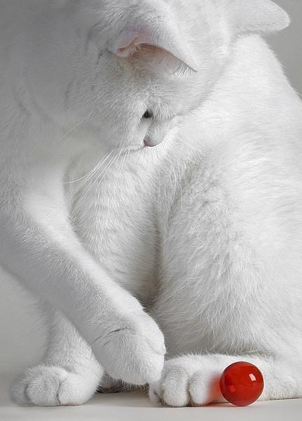 En güzel kedi resimleri - 81. resim