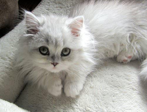 En güzel kedi resimleri - 82. resim