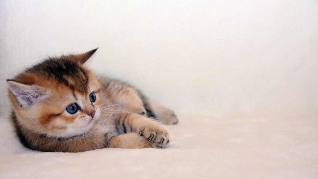 En güzel kedi resimleri - 83. resim