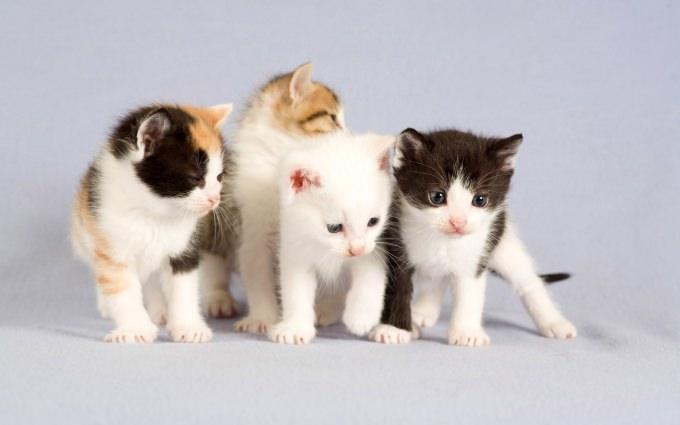 En güzel kedi resimleri - 84. resim