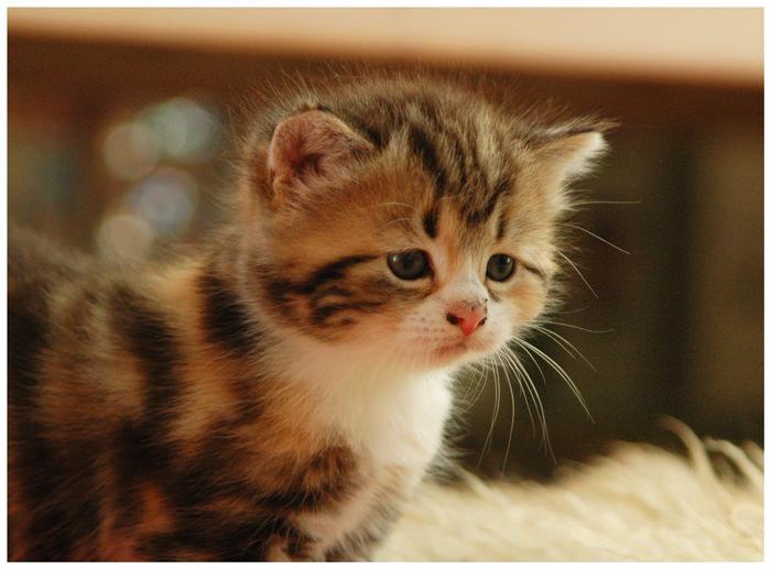 En güzel kedi resimleri - 85. resim