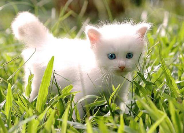En güzel kedi resimleri - 86. resim