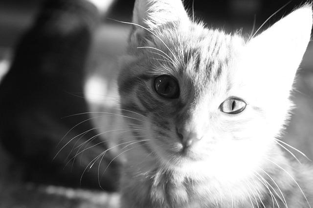 En güzel kedi resimleri - 88. resim