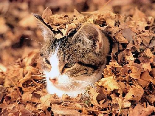 En güzel kedi resimleri - 89. resim