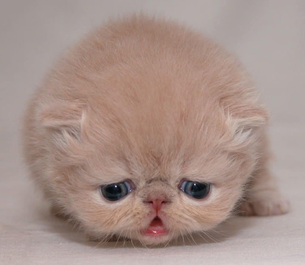 En güzel kedi resimleri - 9. resim