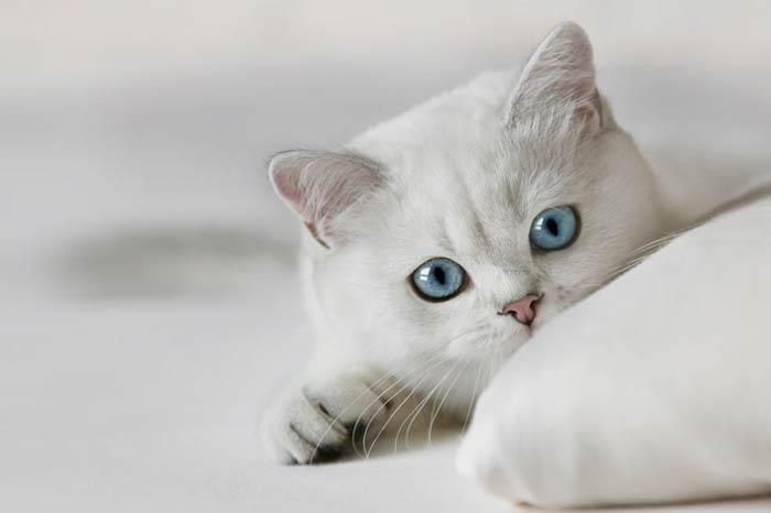 En güzel kedi resimleri - 90. resim