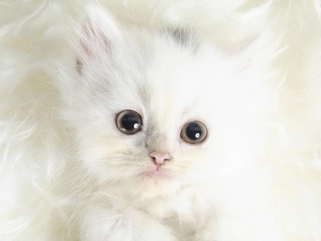 En güzel kedi resimleri - 92. resim