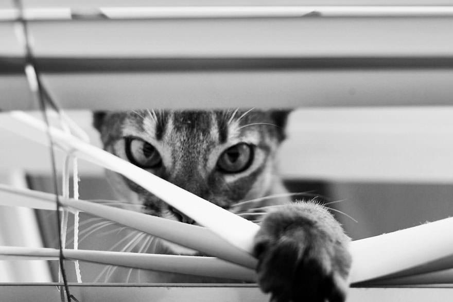 En güzel kedi resimleri - 93. resim