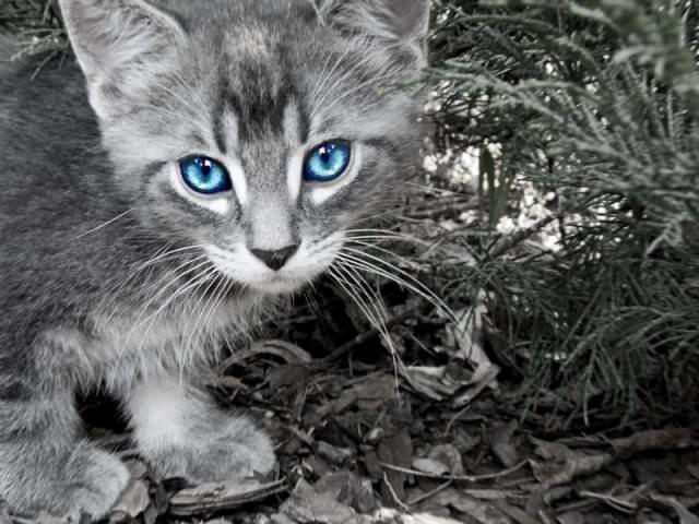 En güzel kedi resimleri - 95. resim