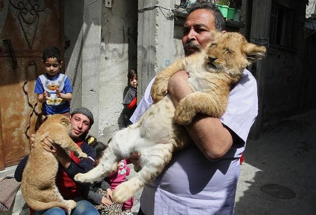 """Gazzeli adamın """"aslan"""" sevgisi"""