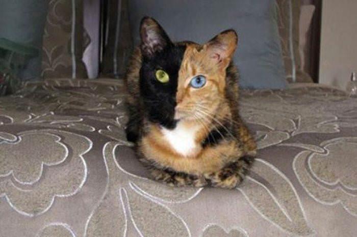 У кота периодически понос