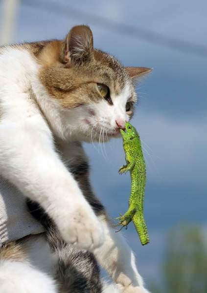Hayvanlar aleminin şaşırtan gerçekleri