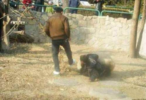 Нападения животных на людей.  Животный мир.