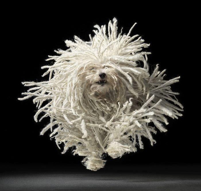 En ilginç köpek resimleri - 1. resim