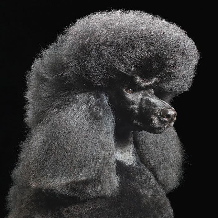 En ilginç köpek resimleri - 2. resim