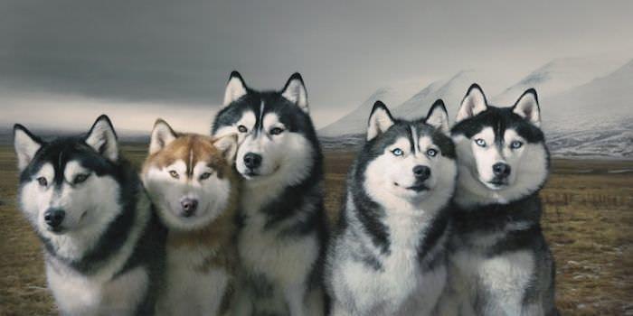 En ilginç köpek resimleri - 7. resim