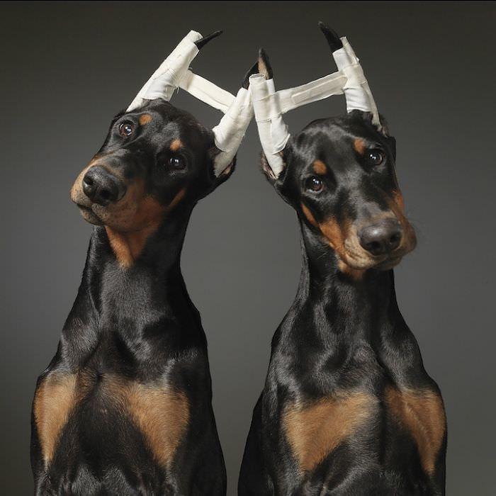 En ilginç köpek resimleri - 10. resim