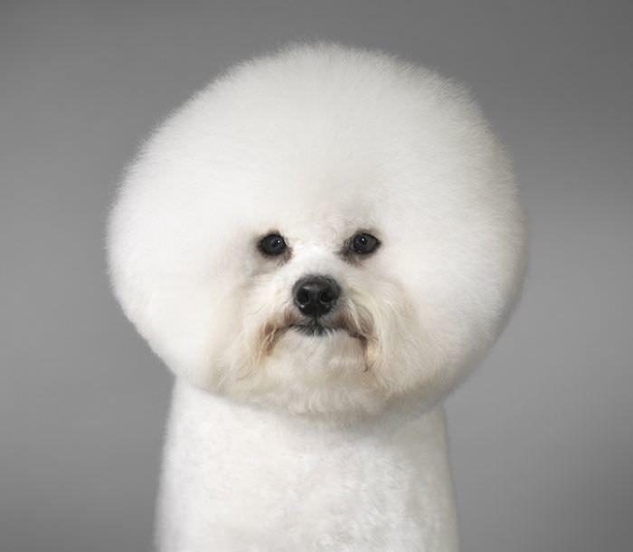 En ilginç köpek resimleri - 11. resim