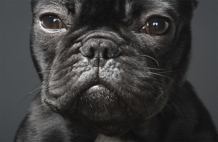En ilginç köpek resimleri - 13. resim