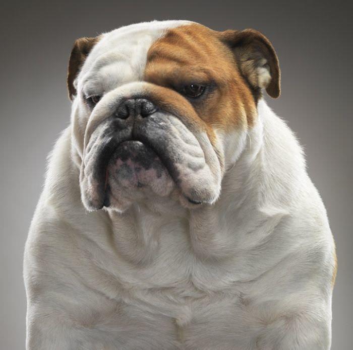 En ilginç köpek resimleri - 14. resim