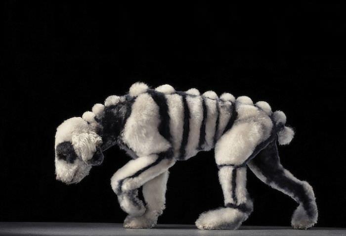 En ilginç köpek resimleri - 15. resim