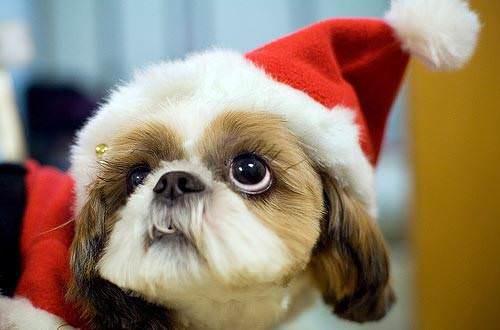 Животные в новогодних нарядах.