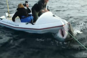 Köpek balığıyla ilgili şoke eden gerçekler