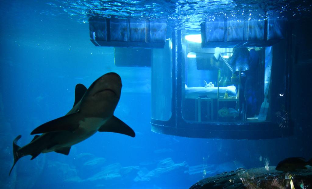 Köpek balıklarıyla dolu akvaryumda özel bir gece