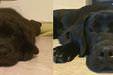 Sevimli hayvanların öncesi ve sonrası