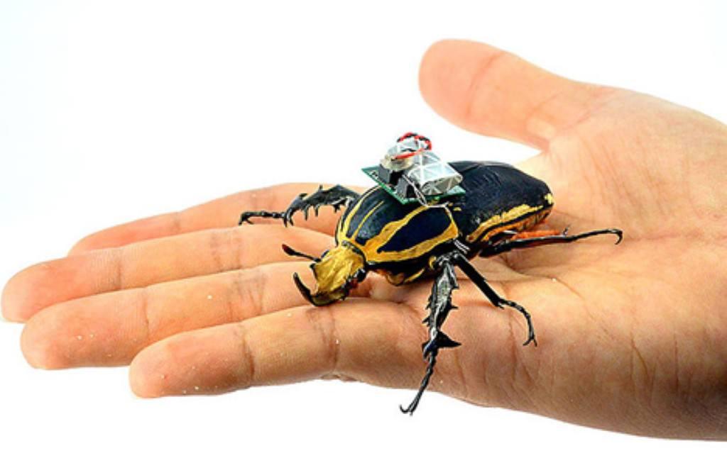 böcek ihalar ile ilgili görsel sonucu