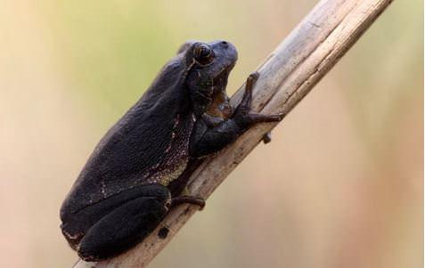 Tamamen siyah renkte hayvanlar