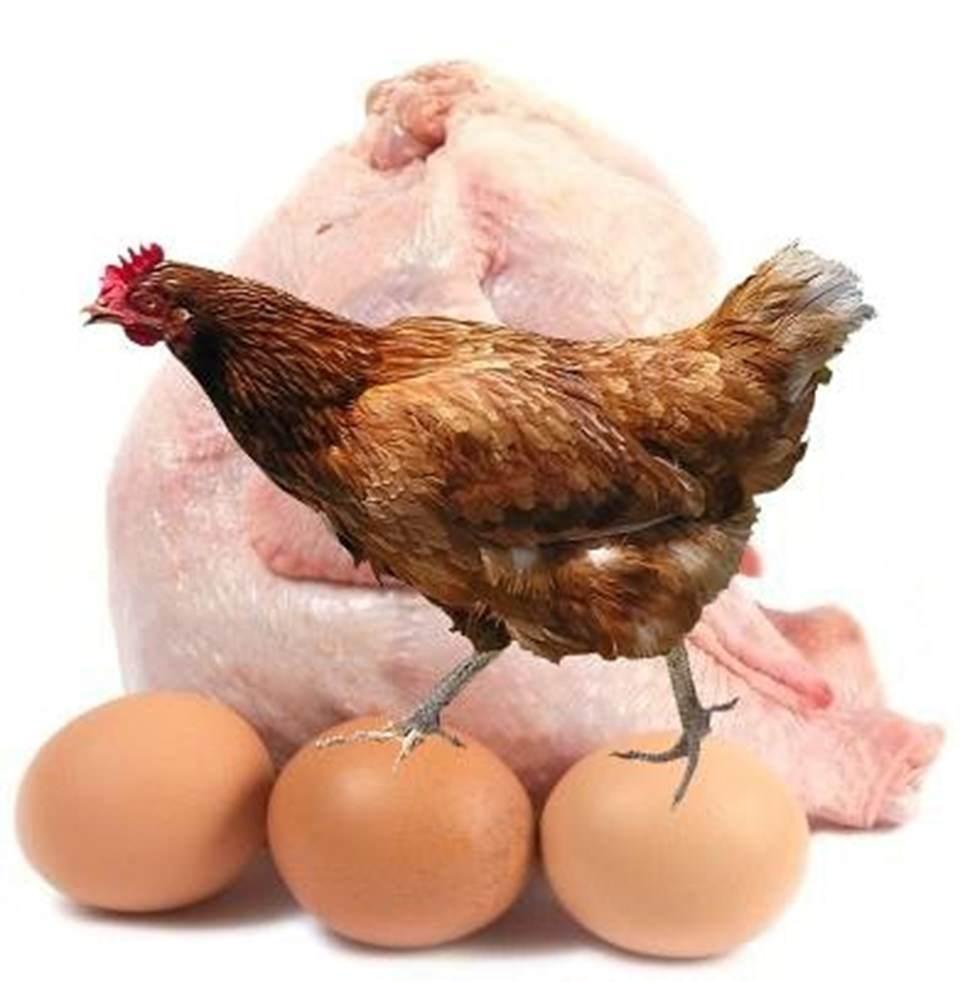 Tavuk etinde arsenik bulundu