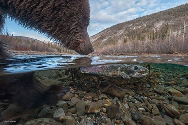 Vahşi doğadan harika 33 fotoğraf