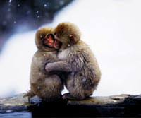 Cinsel al��kanl�klar�m�z� maymunlardan m� ald�k?