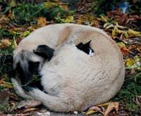 Kediye Köpek Şefkati