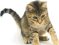�mdat! Bir kedi g�rd�m