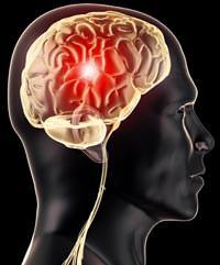 Her beyin hayata kad�n beyni olarak ba�lar!