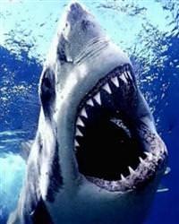 Köpekbalığı dehşeti 1 ölü