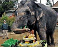 Kuzey Amerika'n�n en ya�l� fili Taj �ld�