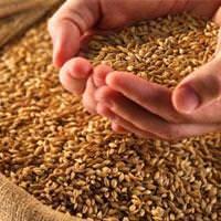 Buğday fiyatları korkutuyor