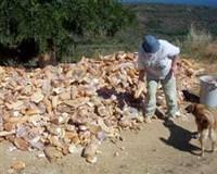 Türkiye'de günlük ekmek israfı