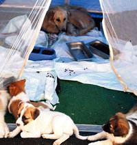 Bolluca'da köpeklere adanan yaşamlar...
