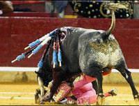 �fkeli bo�a, matadorun y�z�n� b�yle par�alad�