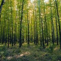Mersin'in ormanlar� geni�liyor