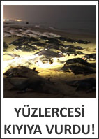 Yzlercesi kyya vurdu
